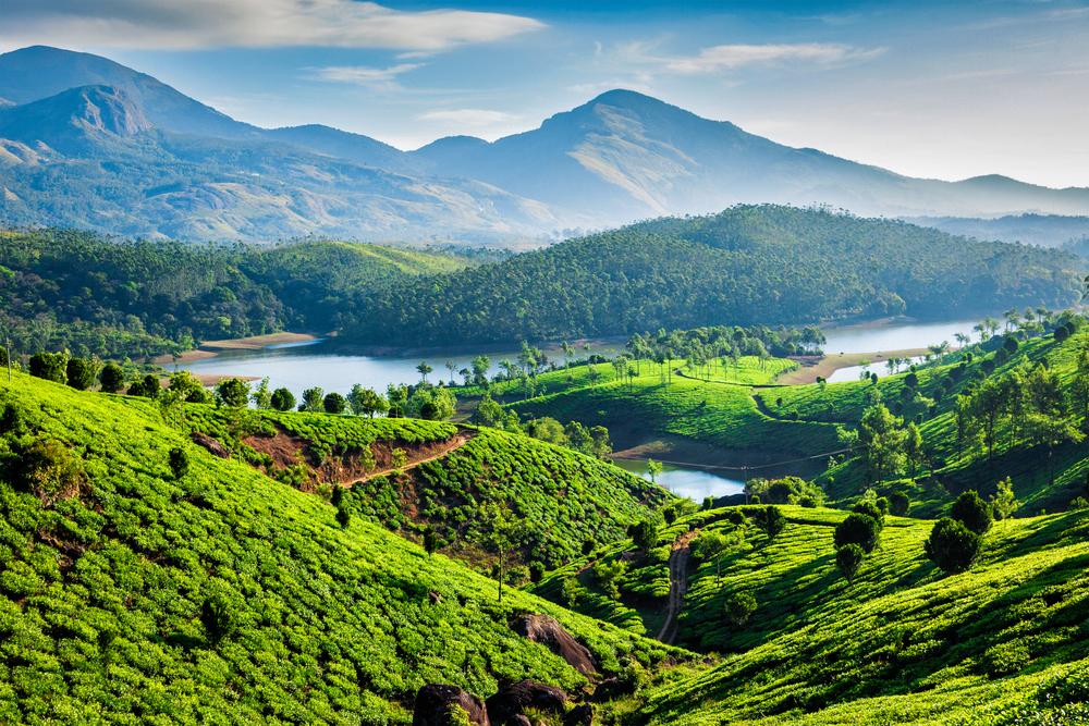 Plantacje herbaty w okolicach Munnar