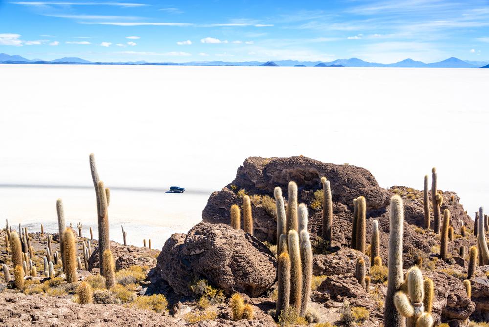 Salar de Uyuni. Widok z Isla Incahuasi